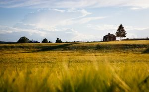 A green field with a house in the distance - is this how moving to Harford County MD with family will look like?