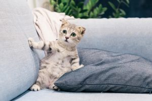 making your home pet-friendly by protecting your furniture from your cat's claws