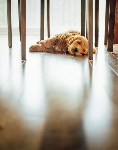 a dog lying on the floor