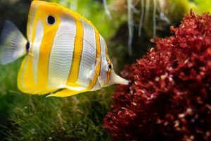 Clean all your aquarium equipment before moving a fish tank
