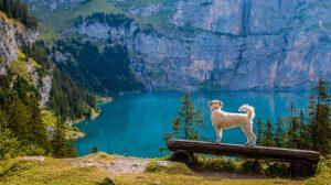 Dog near the lake