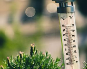 thermometer in the grass