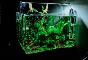 An aquarium with plants in it