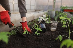 soil people use when packing and moving exotic plants